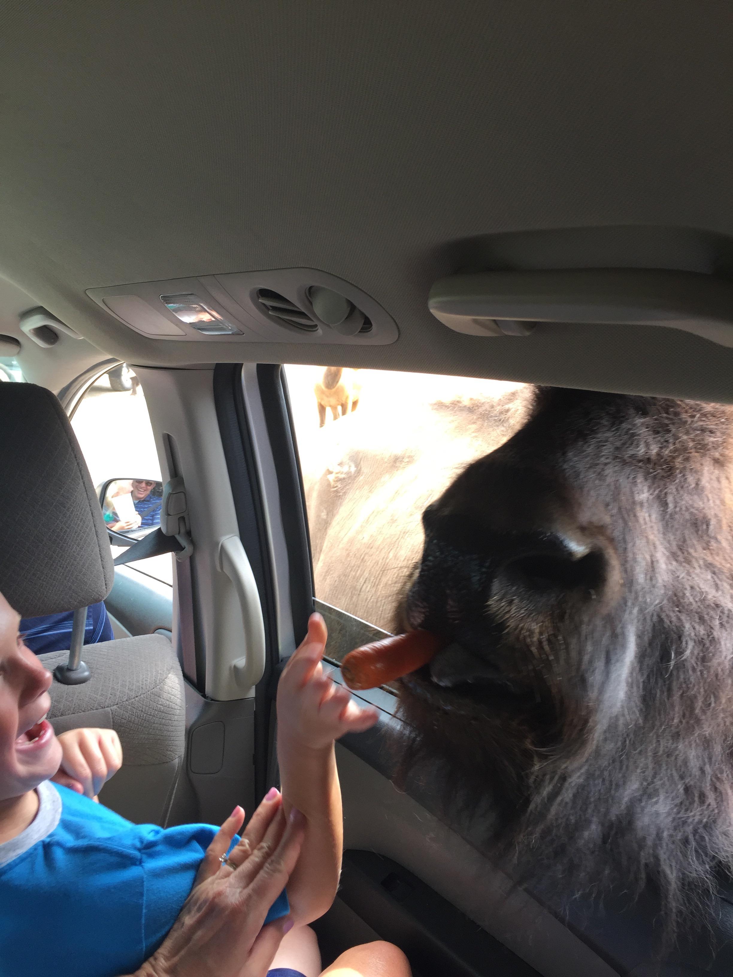 african safari, northwest ohio, mommy blog, mom guilt, chicago blogger